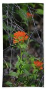 Indian Paint Brush 2 Beach Towel