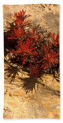Indian Paint Brush Beach Towel