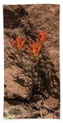 Indian Paintbrush At Bandelier Beach Towel