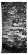 Infared Photograph Beach Towel