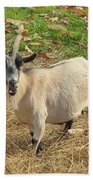 Inquisitive Goat Beach Towel