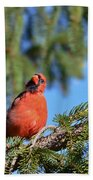 Inquisitive Male Cardinal Beach Towel