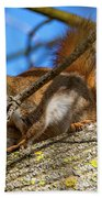 Inquisitive Squirrel Beach Towel