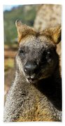 Interview With A Swamp Wallaby Beach Towel