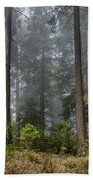 Into The Redwood Forest Beach Towel
