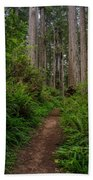 Into The Redwoods Beach Towel