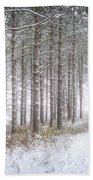 Into The Woods 3 - Winter At Retzer Nature Center  Beach Towel