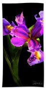 Iris Bloom Two Beach Towel