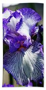 Iris Dressed For Royalty Beach Towel