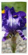 Iris Flower Purple White Irises Nature Landscape Giclee Art Prints Baslee Troutman Beach Towel