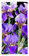 Iris Splendor Beach Towel