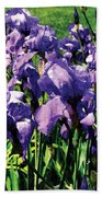 Irises Princess Royal Smith Beach Towel