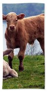 Irish Calves At Lough Eske Beach Towel