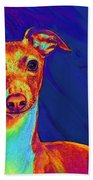 Italian Greyhound  Beach Towel by Jane Schnetlage
