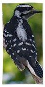I've Got Your Back - Female Downy Woodpecker Beach Towel