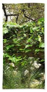 Ivy-covered Arch At The Alamo Beach Towel