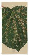 Ivy Leaf, Cissus Porphyrophyllus  Beach Towel
