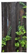 Ivy On Fence Beach Towel