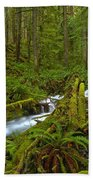 Lifeblood Of The Rainforest Beach Towel