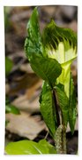 Jack In The Pulpit Beach Sheet