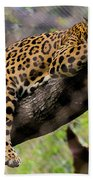 Jaguar Relaxation Beach Towel