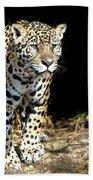 Jaguar Stare Beach Sheet