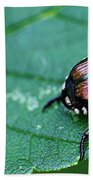 Japanese Beetle Beach Towel