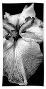 Japanese Iris In Black And White Beach Towel