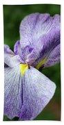 Japanese Iris Unfolding Beach Towel