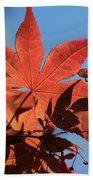 Japanese Maple In Sunlight Beach Towel