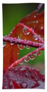 Japanese Maple On A Rainy Day Beach Towel