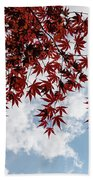 Japanese Maple Red Lace - Horizontal View Downwards Right Beach Towel