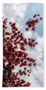 Japanese Maple Red Lace - Vertical Up Right Beach Towel