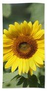 Jarrettsville Sunflowers - The Star Of The Show Beach Towel