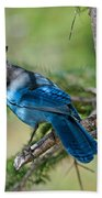 Jay Bird Beach Towel