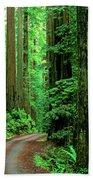 Jedediah Smith Redwoods                            Beach Towel