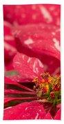 Jingle Bells 3 Poinsettia Beach Towel