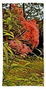 Joe-pye-weed Near Schroon River In New York Beach Towel
