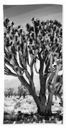 Joshua Trees Bw Beach Towel