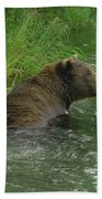 Just A Swim Alaskan Grizzly Beach Towel