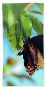 Just Hanging Out - Red-spotted Purple Butterfly Beach Towel