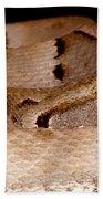 Juvenile Brazilian Lancehead Beach Towel