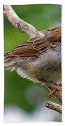 Juvenile House Sparrow Beach Towel