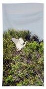 Juvenile Little Blue Beach Sheet
