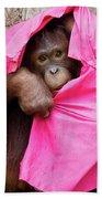 Juvenile Orangutan Beach Towel