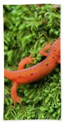 Juvenile Red-eft Green Moss North Carolina Beach Towel