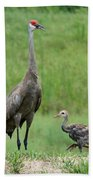 Juvenile Sandhill Crane With Protective Papa Beach Towel
