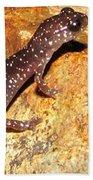 Juvenile Slimy Salamander Beach Towel