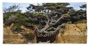Kalaloch Hanging Tree Beach Sheet