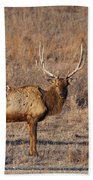 Kansas Elk Beach Towel